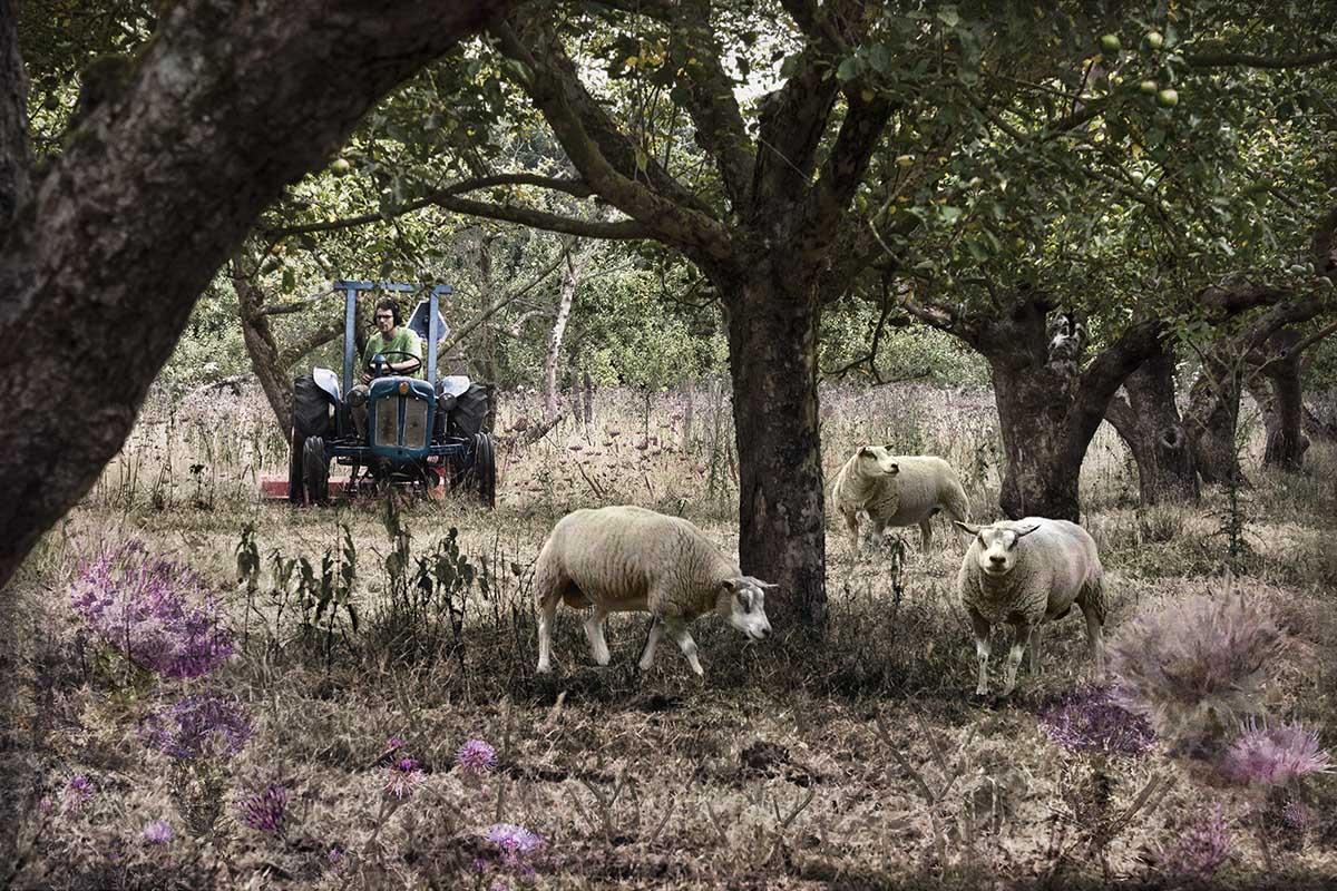 10-Appelboomgaard