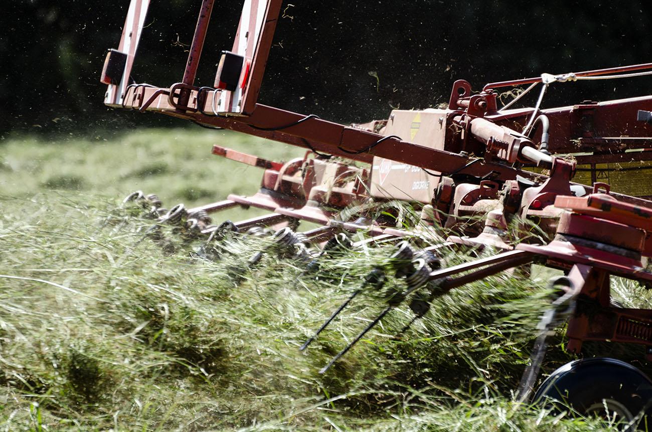 Gras schudden 2, Coelhorst